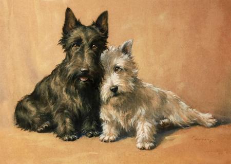 Tüylü Köpekler resim