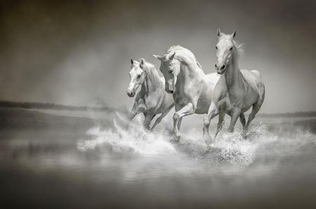 Üç Beyaz At resim