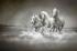 Üç Beyaz At k0
