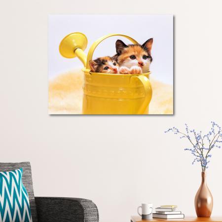 Yavru Kediler resim2