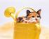 Yavru Kediler k0
