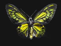 Yeşil Kelebek - HT-C-133