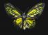 Yeşil Kelebek k0