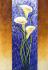 Zambak Çiçegi k0