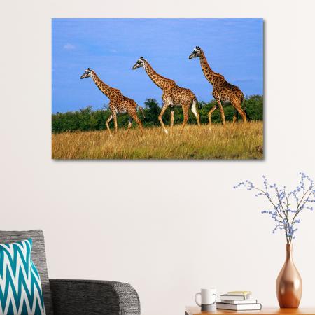 Zürafalar resim2