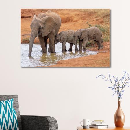 Fil ve Yavruları resim2