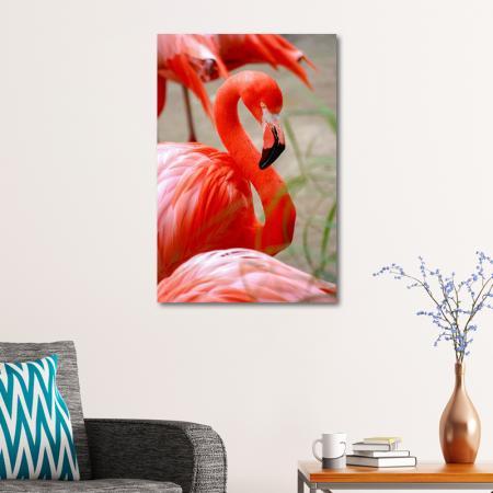 Flamingo resim2