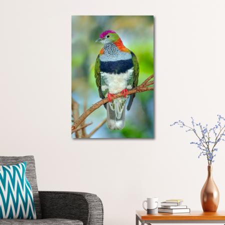 Fruit Dove resim2