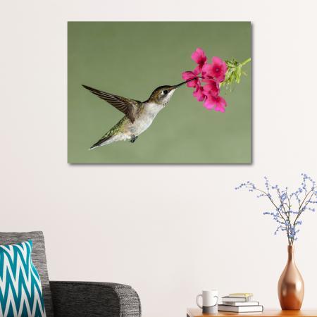 Kuş resim2