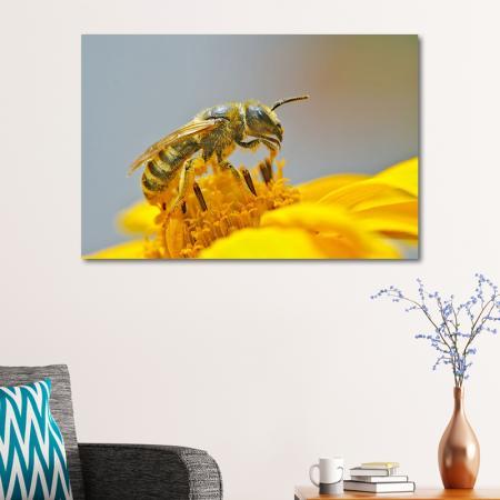 Polen Toplayan Arı resim2