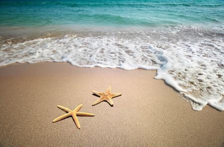 Denizyıldızları resim